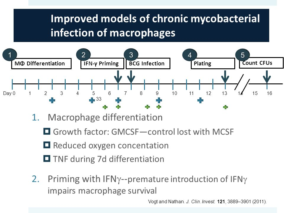 Improved models of chronic mycobacterial infection of macrophages MΦ Differentiation IFN-γ PrimingBCG InfectionPlating Count CFUs Day 0 1 2 3 4 5 6 7 8 9 10 11 12 13 14 15 16 33 Vogt and Nathan.