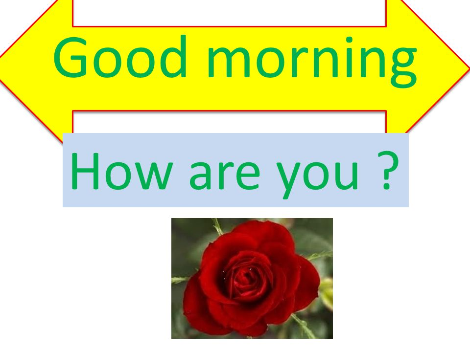 Good morning How are you