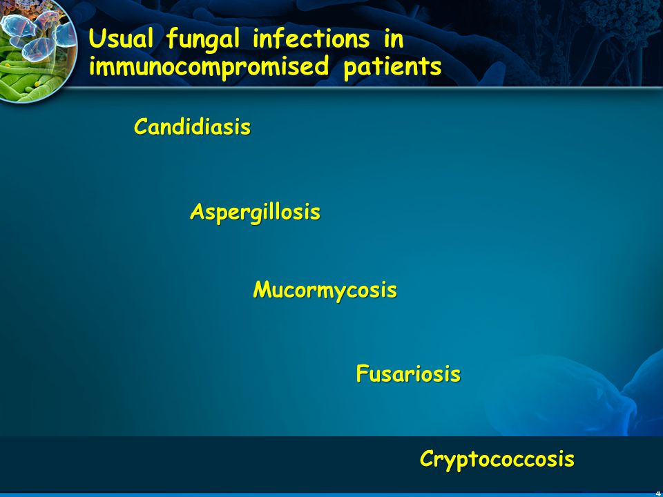 65 Caspo (556) L-AmB (539) Composite Success 33.9%33.7% Success Baseline Infections 14/27 (52%)7/27 (26%) Breakthrough Infections 29 (5.2%)24 (4.5%) Etiological Agents* Aspergillus 10 9 Candida 16 15 Fusarium 1 0 Zygomycetes 2 0 Other 1 1 Caspo (556) L-AmB (539) Composite Success 33.9%33.7% Success Baseline Infections 14/27 (52%)7/27 (26%) Breakthrough Infections 29 (5.2%)24 (4.5%) Etiological Agents* Aspergillus 10 9 Candida 16 15 Fusarium 1 0 Zygomycetes 2 0 Other 1 1 Efficacy of Caspofungin vs Empirical L-AmB in Neutropenic Patients * Walsh TJ et al, New Eng J Med, 2004;351:1391-1402 *Patients may have had more than one organism
