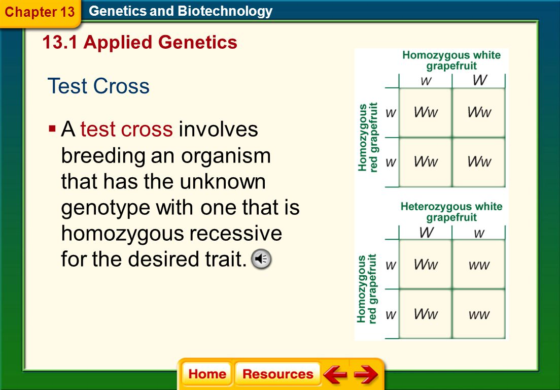 1.A 2.B 3.C 4.D CDQ 2 Genetics and Biotechnology Chapter 13 Chapter Diagnostic Questions A.