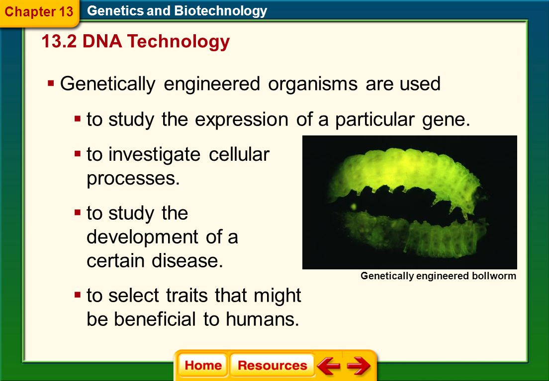 1.A 2.B 3.C 4.D FQ 1 Genetics and Biotechnology Chapter 13 A.