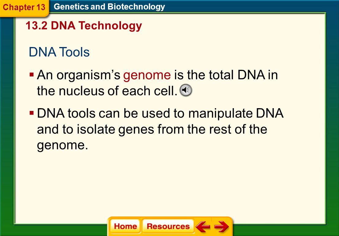 Genetics and Biotechnology Glencoe Biology Transparencies Chapter 13
