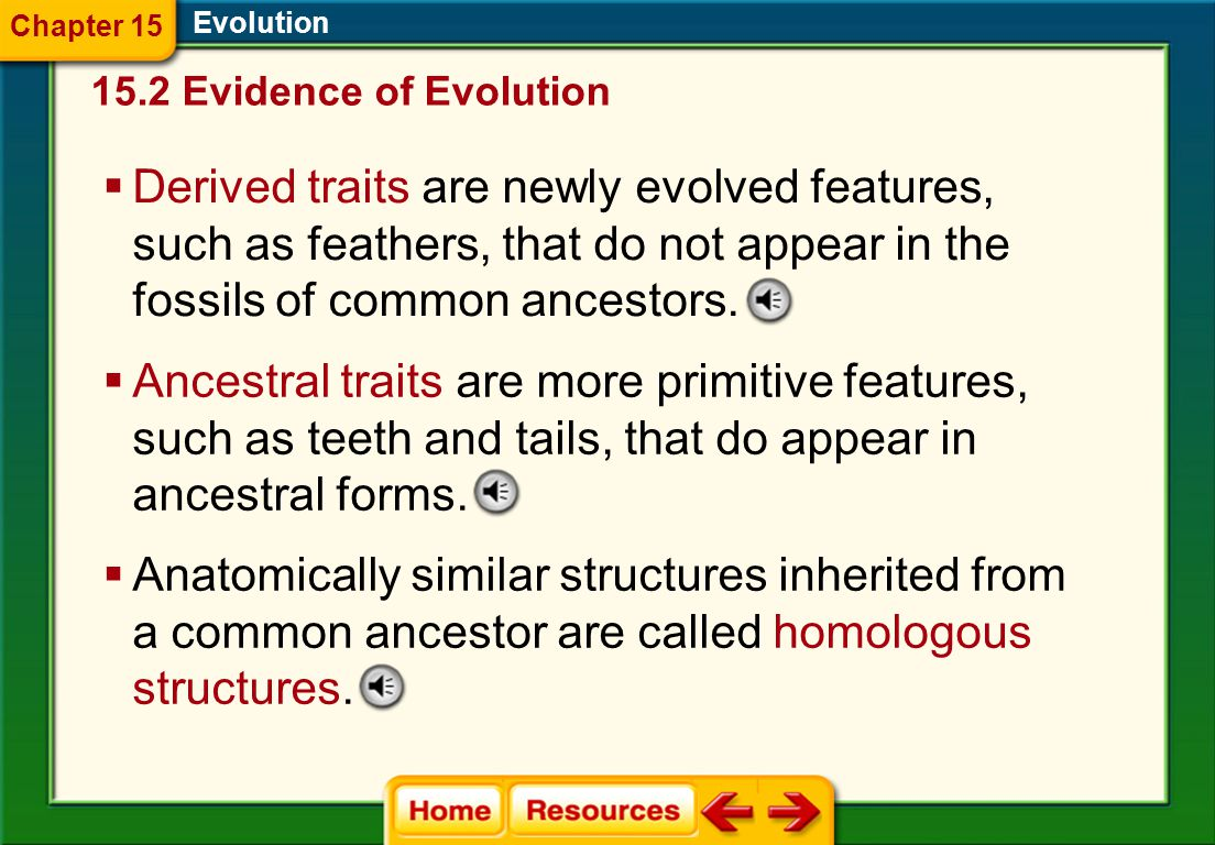 Evolution  Derived traits are newly evolved features, such as feathers, that do not appear in the fossils of common ancestors.
