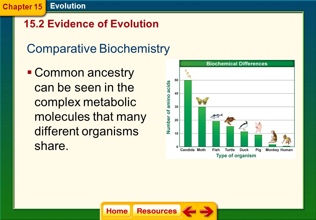 Evolution  Common ancestry can be seen in the complex metabolic molecules that many different organisms share.