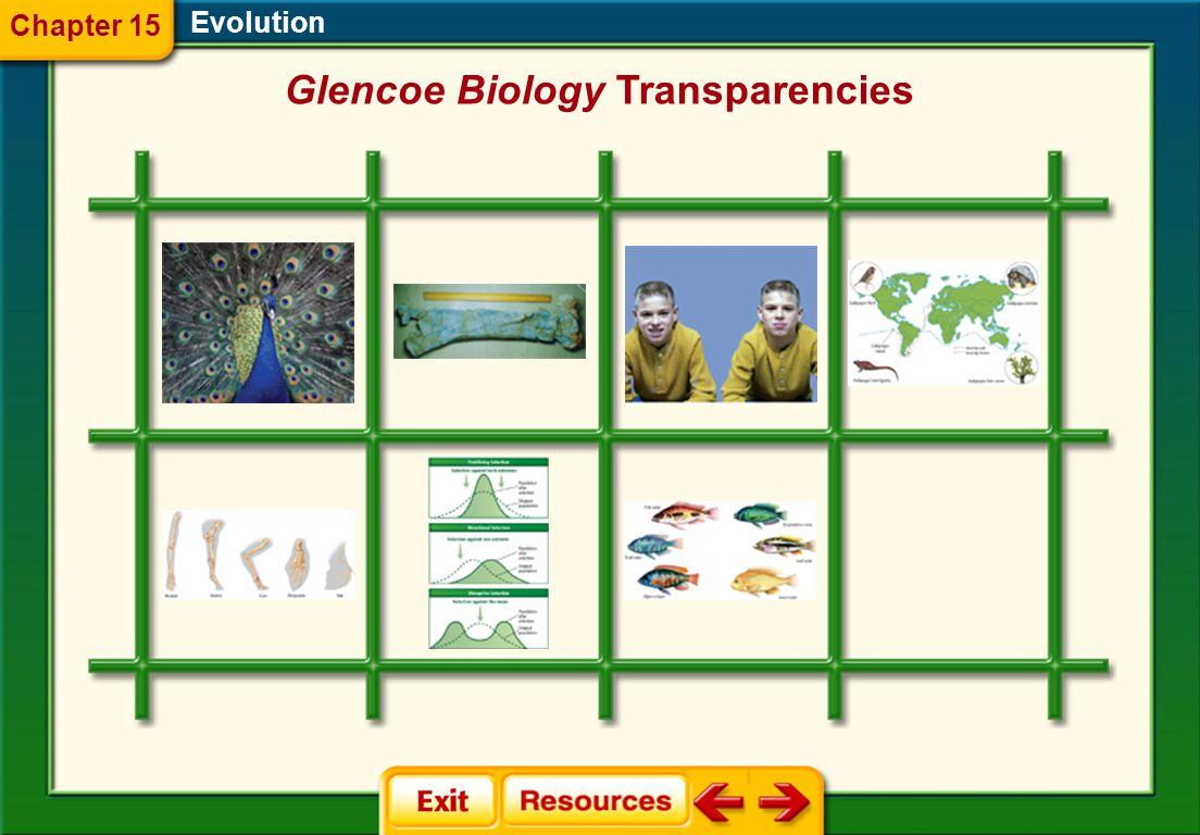 Evolution Chapter 15 Glencoe Biology Transparencies