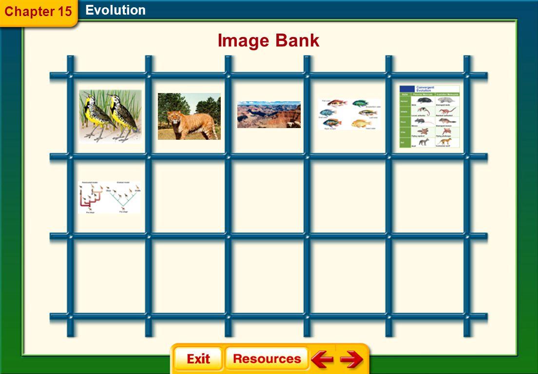 Evolution Chapter 15 Image Bank