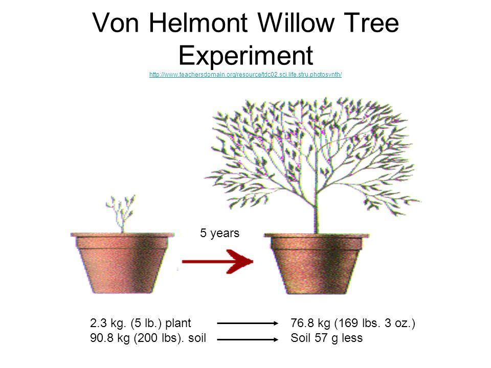 Von Helmont Willow Tree Experiment http://www.teachersdomain.org/resource/tdc02.sci.life.stru.photosynth/ http://www.teachersdomain.org/resource/tdc02.sci.life.stru.photosynth/ 2.3 kg.