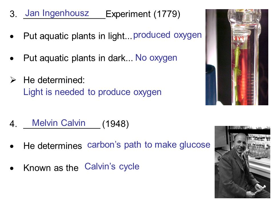 3.________________Experiment (1779)  Put aquatic plants in light...