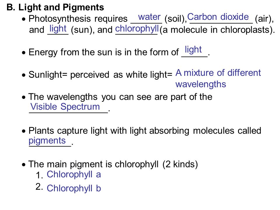 B. Light and Pigments  Photosynthesis requires ______ (soil), ____________ (air), and ____ (sun), and ________ (a molecule in chloroplasts).  Energy