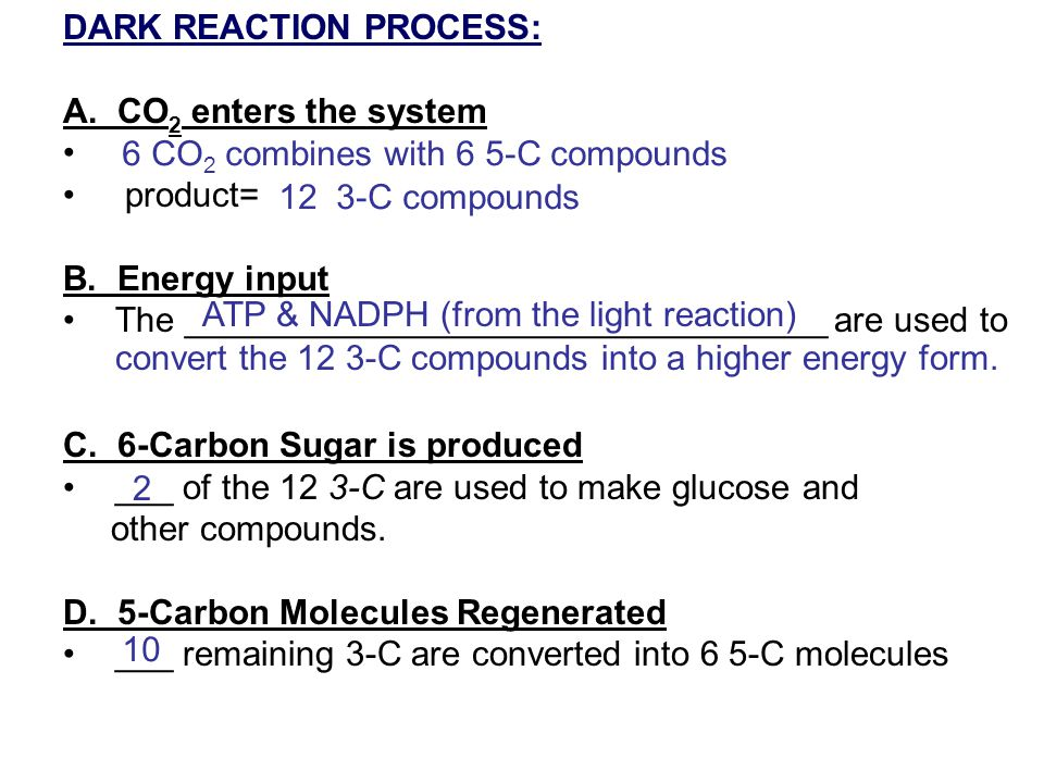 DARK REACTION PROCESS: A. CO 2 enters the system product= B. Energy input The _________________________________ are used to C. 6-Carbon Sugar is produ
