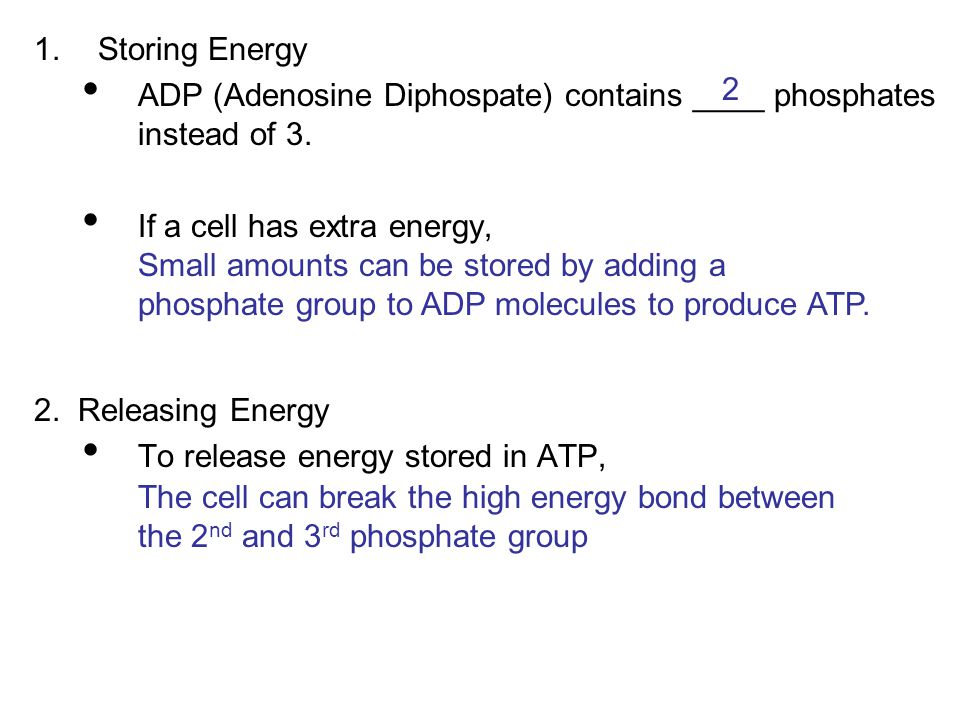 1.Storing Energy ADP (Adenosine Diphospate) contains ____ phosphates instead of 3. If a cell has extra energy, 2. Releasing Energy To release energy s