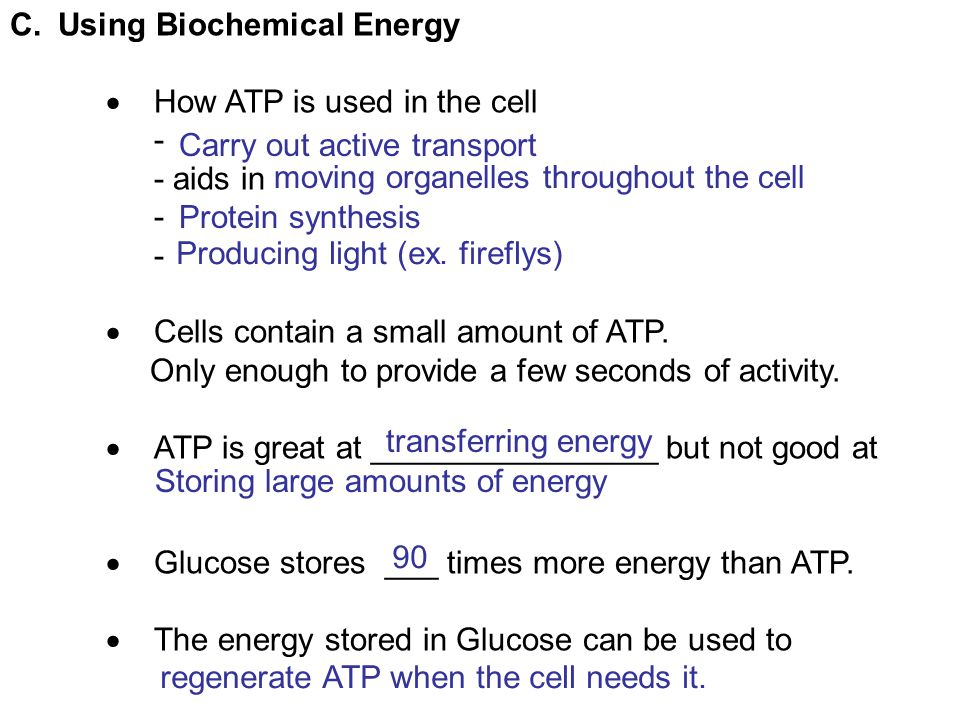C.Using Biochemical Energy  How ATP is used in the cell - - aids in -  Cells contain a small amount of ATP. Only enough to provide a few seconds of