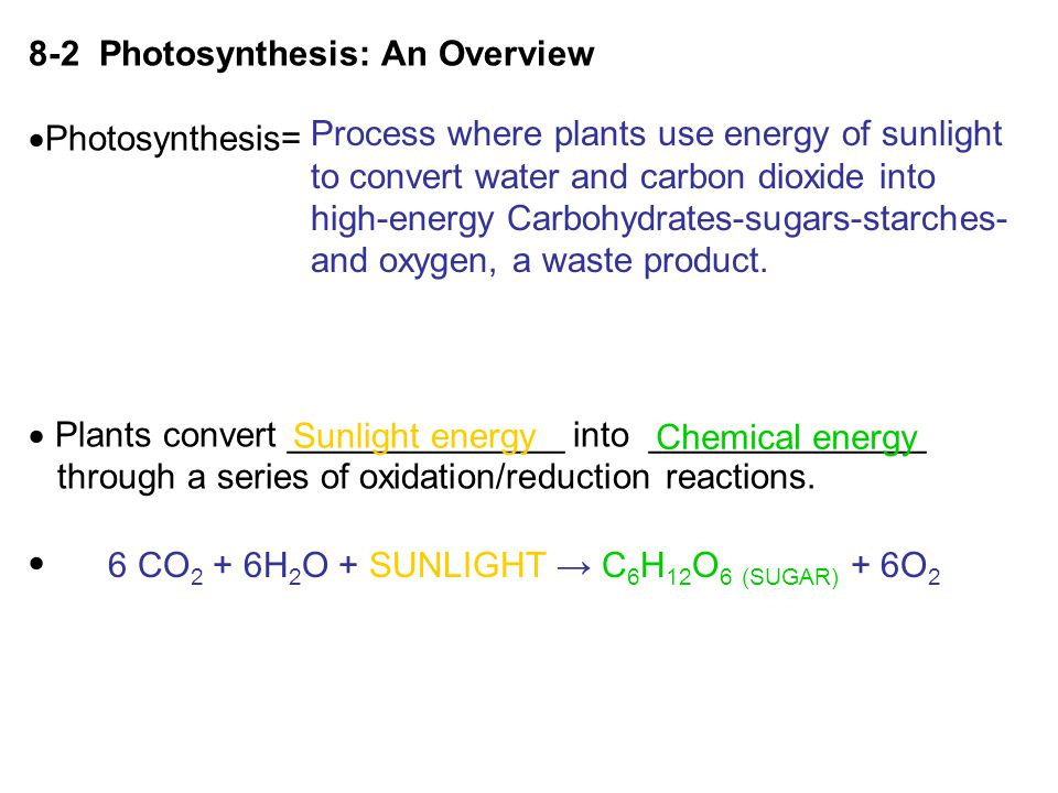 8-2 Photosynthesis: An Overview  Photosynthesis=  Plants convert ______________ into ______________ through a series of oxidation/reduction reaction