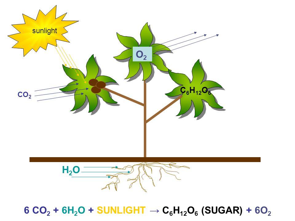 sunlight O2O2 CO 2 H2OH2O C 6 H 12 O 6