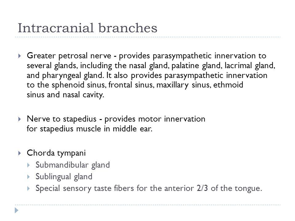 Intracranial branches  Greater petrosal nerve - provides parasympathetic innervation to several glands, including the nasal gland, palatine gland, la