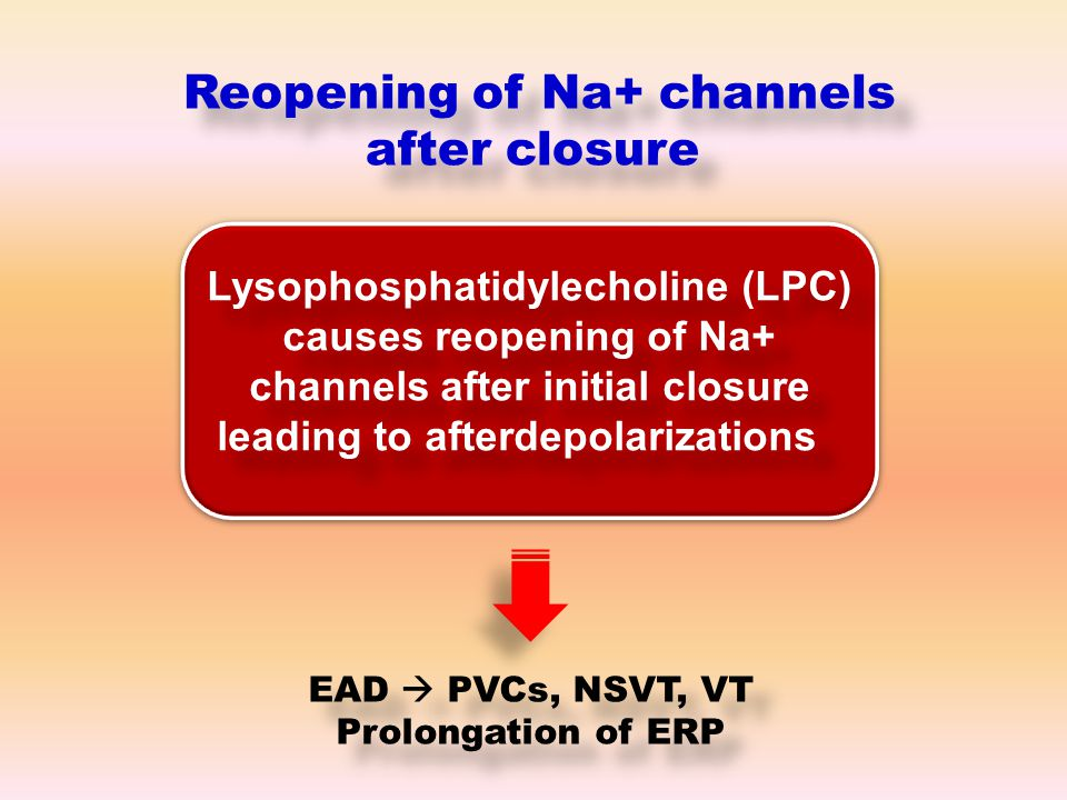 Lysophosphatidylecholine (LPC) causes reopening of Na+ channels after initial closure leading to afterdepolarizations Reopening of Na+ channels after closure EAD  PVCs, NSVT, VT Prolongation of ERP EAD  PVCs, NSVT, VT Prolongation of ERP