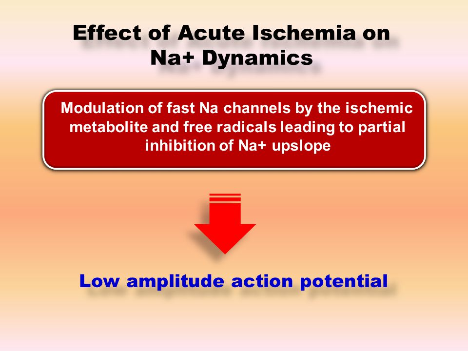 Effect of Acute Ischemia on Na+ Dynamics Modulation of fast Na channels by the ischemic metabolite and free radicals leading to partial inhibition of Na+ upslope Low amplitude action potential