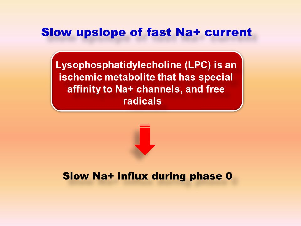 Lysophosphatidylecholine (LPC) is an ischemic metabolite that has special affinity to Na+ channels, and free radicals Slow upslope of fast Na+ current Slow Na+ influx during phase 0