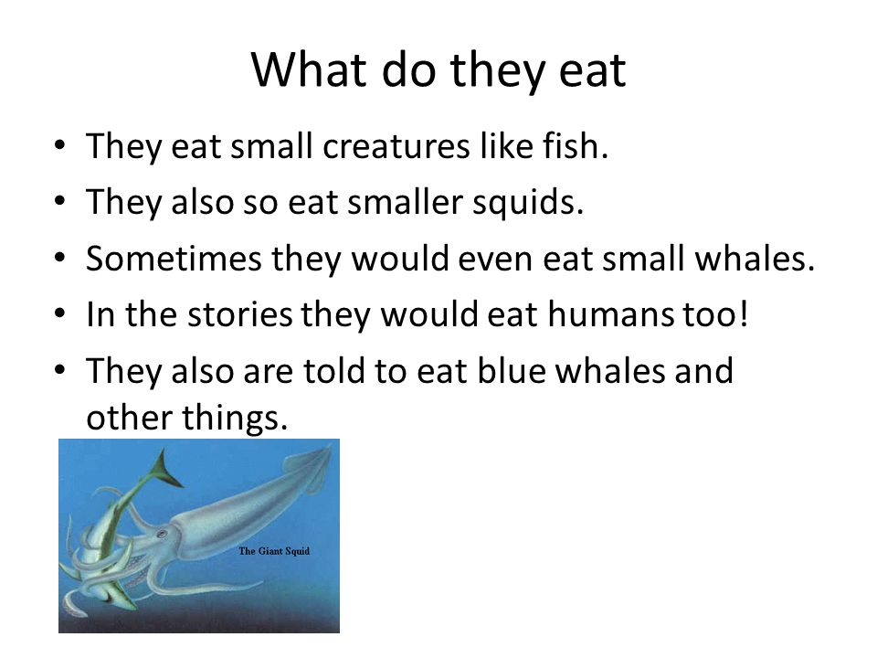 What do they eat They eat small creatures like fish.
