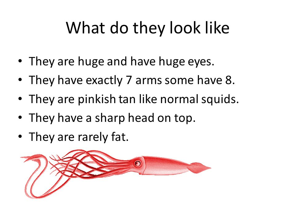 What do they look like They are huge and have huge eyes.