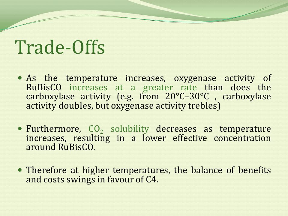 Trade-Offs As the temperature increases, oxygenase activity of RuBisCO increases at a greater rate than does the carboxylase activity (e.g.