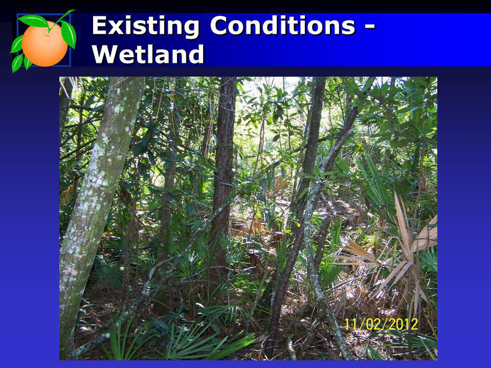 Existing Conditions - Wetland