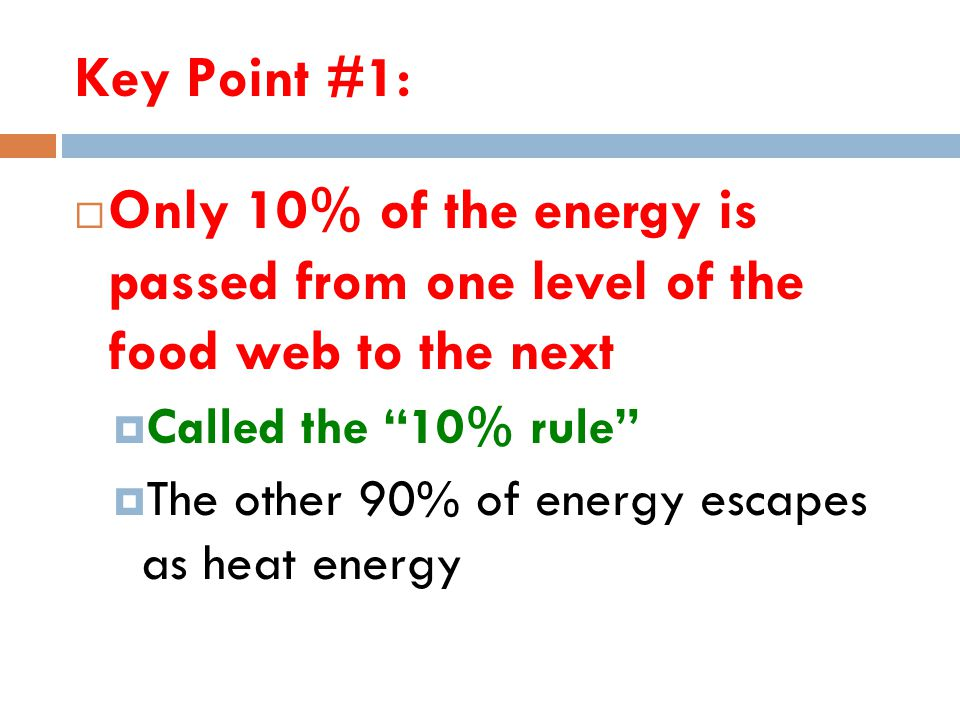 """Key Point #1:  Only 10% of the energy is passed from one level of the food web to the next  Called the """"10% rule""""  The other 90% of energy escapes"""