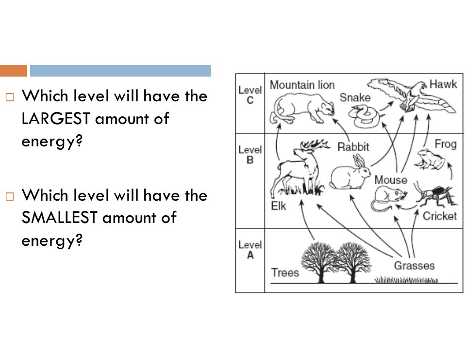 Which level will have the LARGEST amount of energy?  Which level will have the SMALLEST amount of energy?