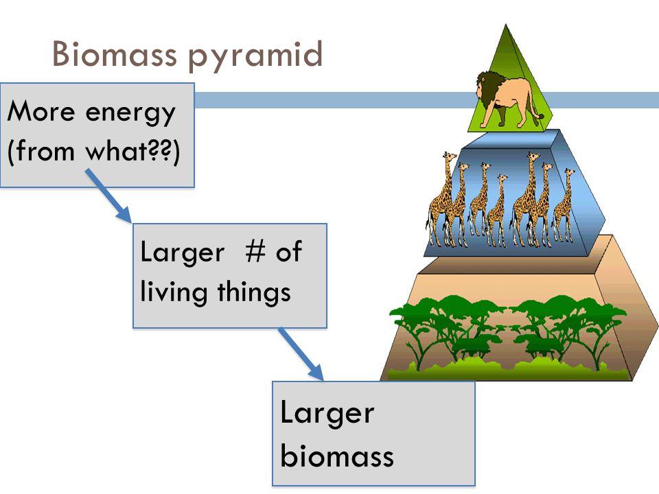 Biomass pyramid Larger # of living things Larger biomass More energy (from what??) More energy (from what??)