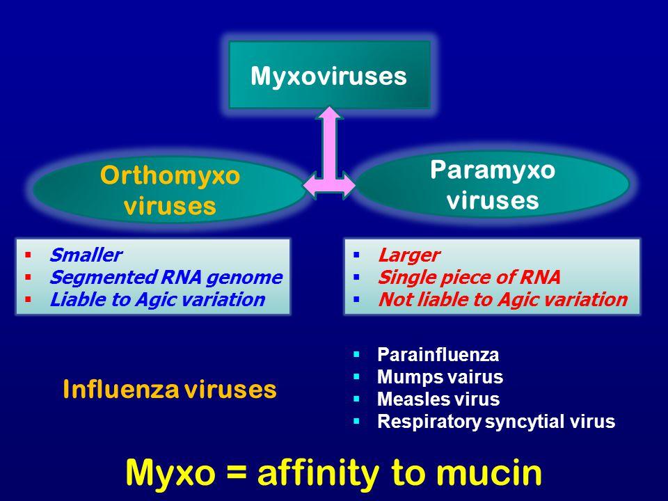 Myxoviruses Orthomyxo viruses Paramyxo viruses  Smaller  Segmented RNA genome  Liable to Agic variation  Larger  Single piece of RNA  Not liable