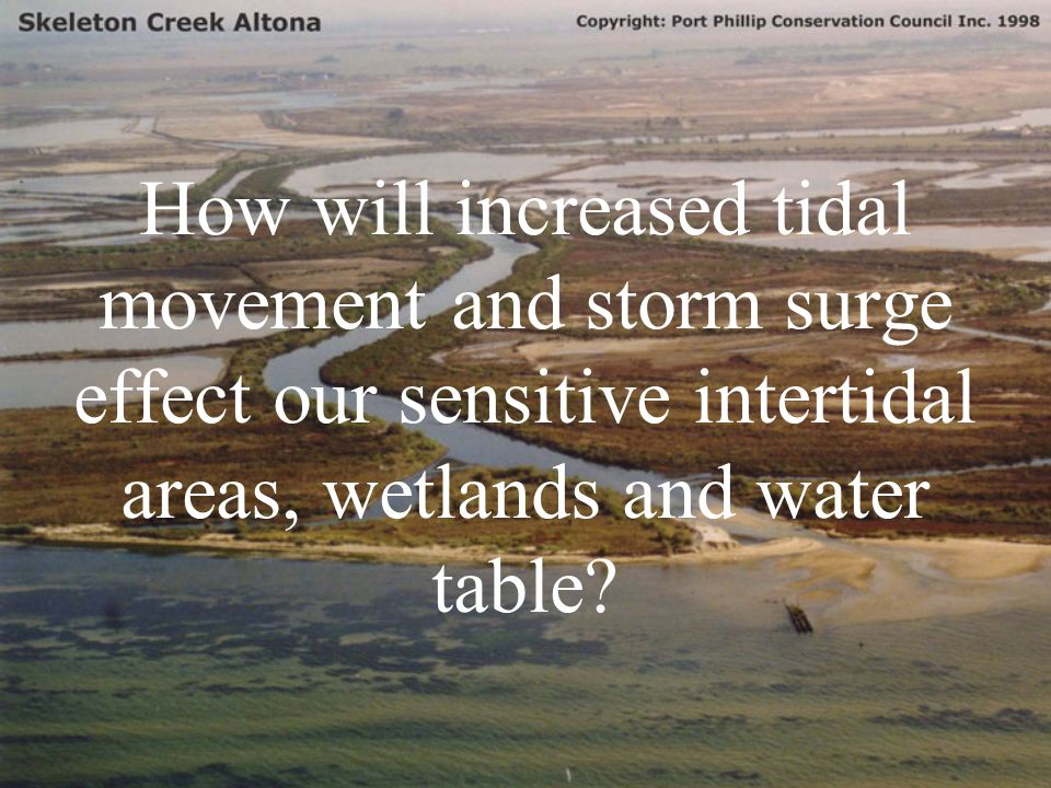 How will increased tidal movement and storm surge effect our sensitive intertidal areas, wetlands and water table?