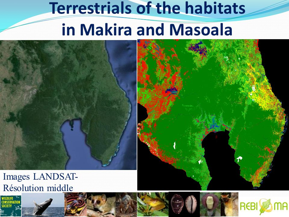 Terrestrials of the habitats in Makira and Masoala Images LANDSAT- Résolution middle