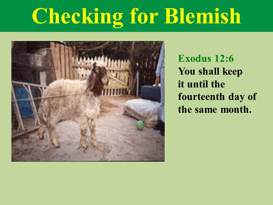 Checking for Blemish Exodus 12:6 You shall keep it until the fourteenth day of the same month.