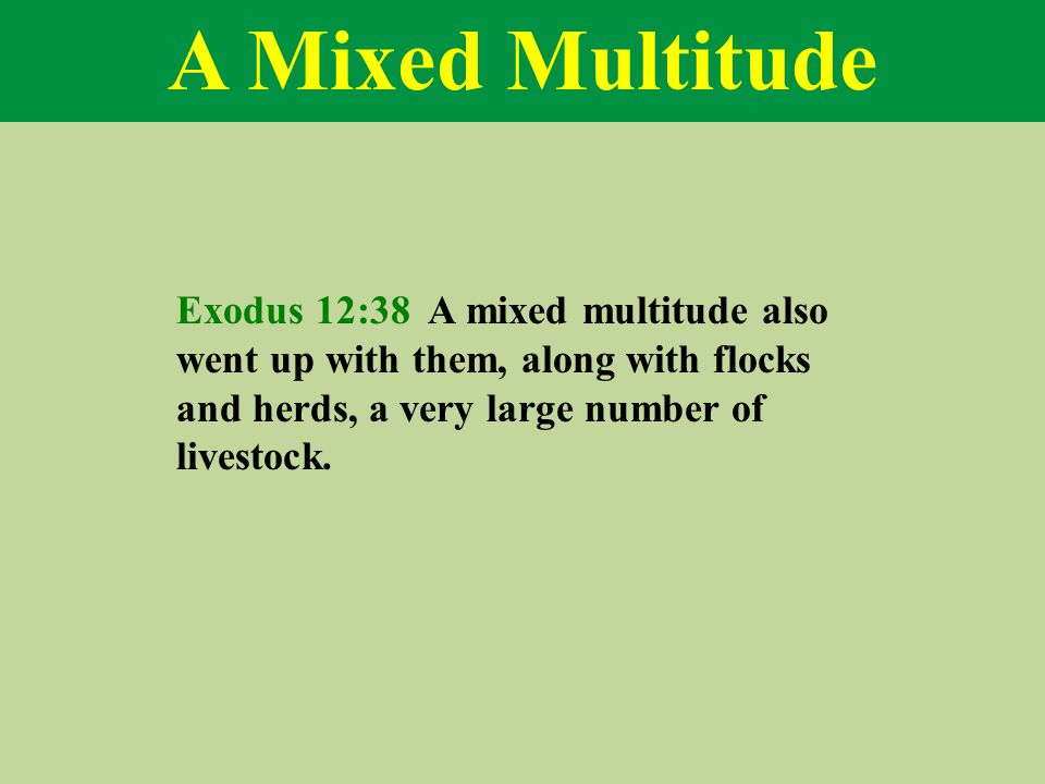 A Mixed Multitude Exodus 12:38 A mixed multitude also went up with them, along with flocks and herds, a very large number of livestock.