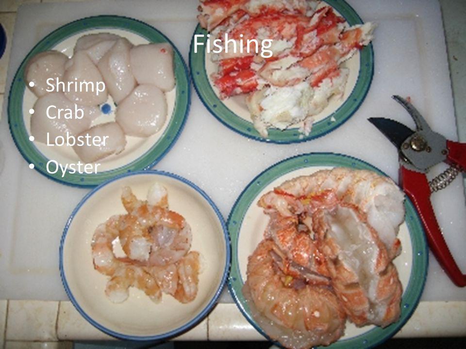 Fishing Shrimp Crab Lobster Oyster