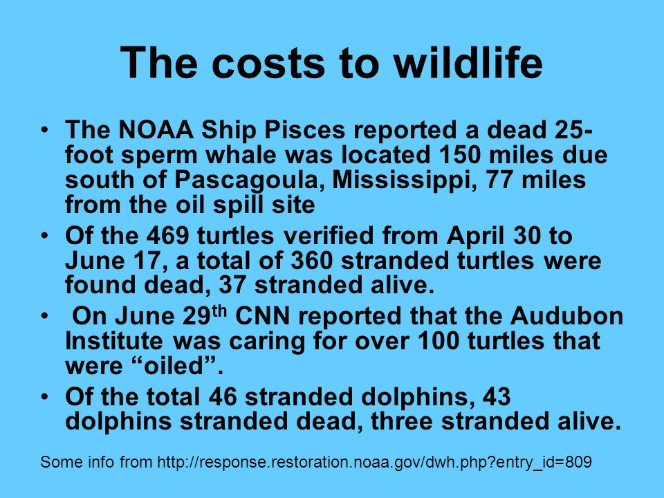 The costs to wildlife The NOAA Ship Pisces reported a dead 25- foot sperm whale was located 150 miles due south of Pascagoula, Mississippi, 77 miles from the oil spill site Of the 469 turtles verified from April 30 to June 17, a total of 360 stranded turtles were found dead, 37 stranded alive.