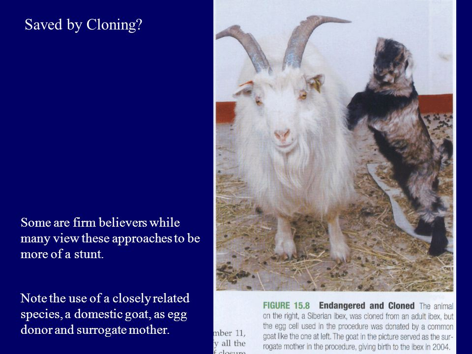 Saved by Cloning? Some are firm believers while many view these approaches to be more of a stunt. Note the use of a closely related species, a domesti