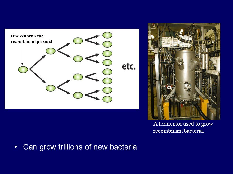 Can grow trillions of new bacteria A fermentor used to grow recombinant bacteria. One cell with the recombinant plasmid