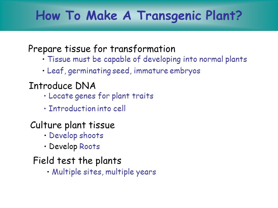 Introducing the Gene or Developing Transgenics Steps 1.Create transformation cassette 2.Introduce and select for transformants