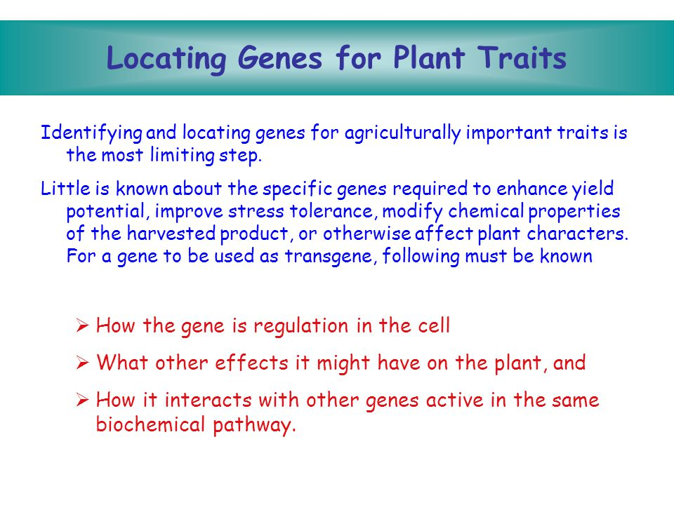 Designing Genes for Insertion Once a gene has been isolated and cloned (amplified in a bacterial vector), it must undergo several modifications before it can be effectively inserted into a plant.