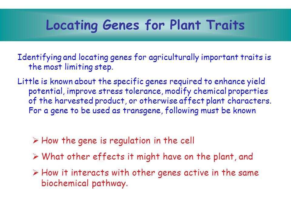 The Next Test Is The Field Non-transgenics Transgenics Herbicide Resistance