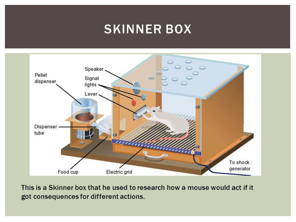 SKINNER BOX This is a Skinner box that he used to research how a mouse would act if it got consequences for different actions.