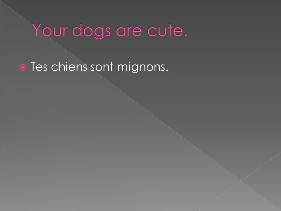  Tes chiens sont mignons.