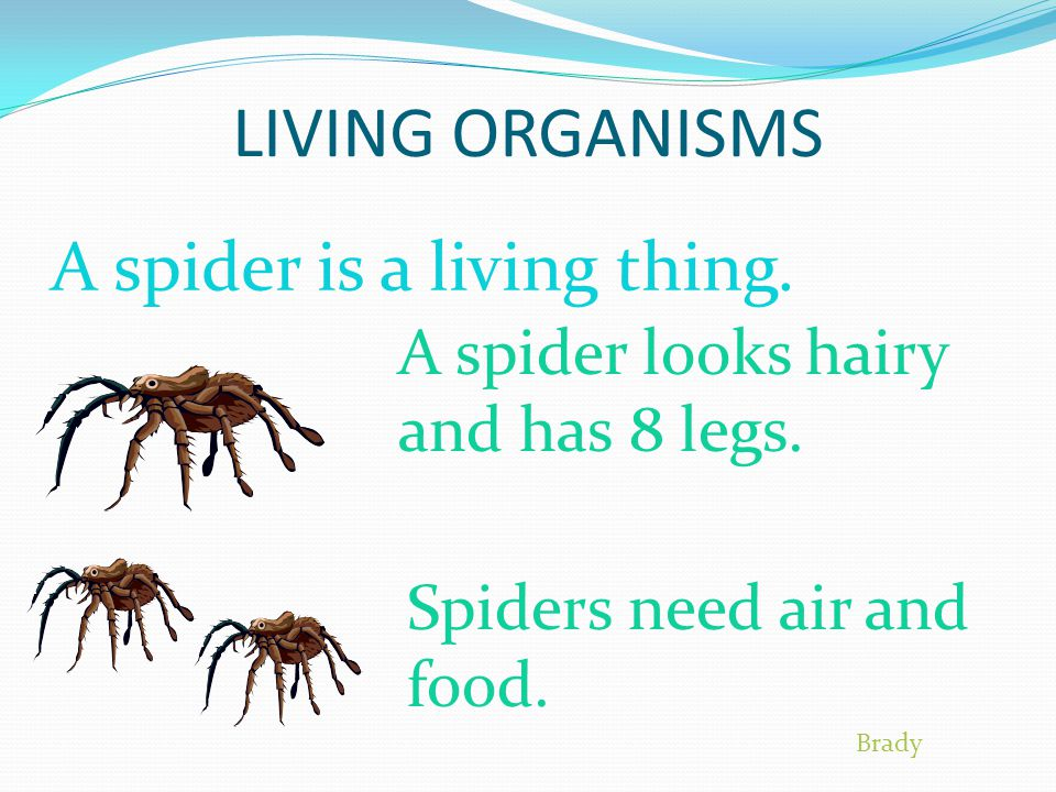 LIVING ORGANISMS A spider is a living thing.A spider looks hairy and has 8 legs.