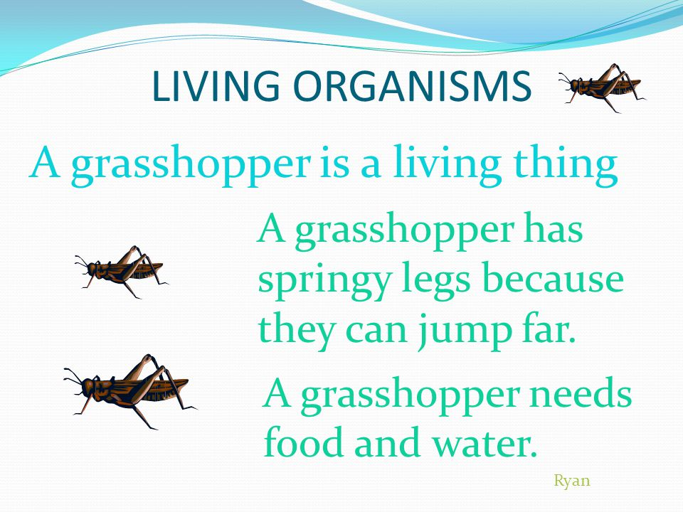LIVING ORGANISMS A grasshopper is a living thing A grasshopper has springy legs because they can jump far.