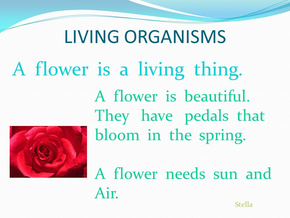 LIVING ORGANISMS A flower is a living thing.A flower is beautiful.