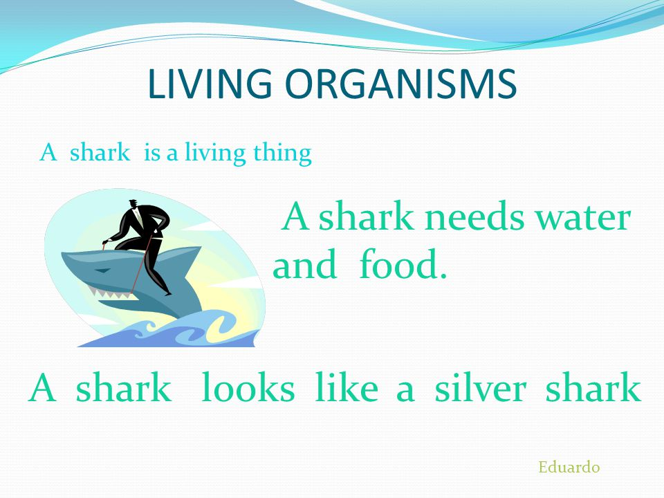 LIVING ORGANISMS A shark needs water and food.