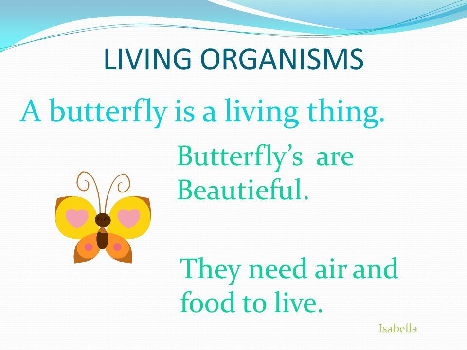 LIVING ORGANISMS A butterfly is a living thing. Butterfly's are Beautieful.