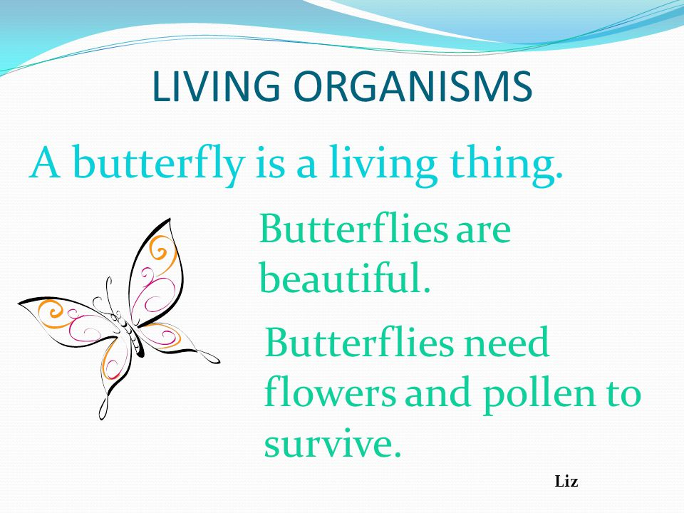 LIVING ORGANISMS A butterfly is a living thing.Butterflies are beautiful.