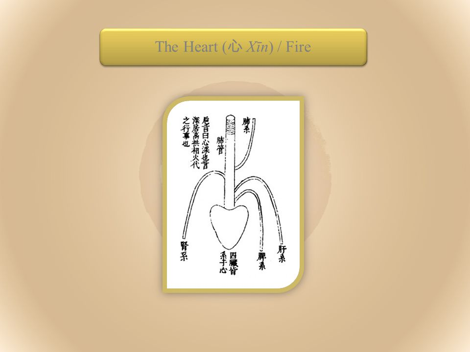 The Heart ( 心 Xīn) / Fire